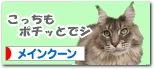 rai-banner02.jpg